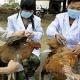 В Китае будут закрыты рынки живой птицы – как профилактика птичьего гриппа