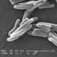 FDA одобрил новое лекарство от туберкулеза
