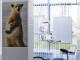 Установка протезов с гарантиями по приемлемой стоимости от клиники «Белый Медведь»