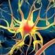 Ученые изучили работы генератора  нервных импульсов
