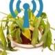 Wi-Fi убивает растения?