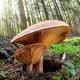 Эффект от употребления психоделических грибов оказался подобным процессу сна
