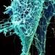 Болезнь Эбола вышла «из-под контроля»