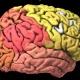Первая полная модель мозга показывает, насколько пластичен организм